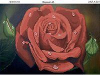 Красная роза К-358 схема для вышивания бисером на ткани