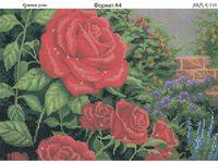 Красные розы К-146 схема с рисунком на габардине для полного вышивания бисером