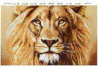 Величие льва, DANA-3128 схема для вышивки бисером на ткани
