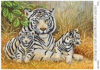 Тигриная идилия