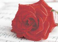 Роза схема для вышивки бисером на ткани А3-0171
