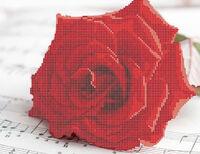 Роза схема для вышивки бисером на ткани А4-085