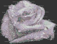 Роза страсти схема для вышивки бисером на ткани А3-48