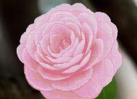 Розовая камелия схема для вышивки бисером на ткани А3-0173