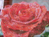 Утренняя роза схема для вышивки бисером на ткани А3-44