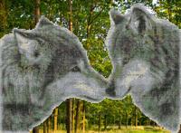 Волчья нежность схема для вышивки бисером на ткани А3-40