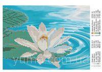 Цветок Лотоса, ЮМА-45 схема-рисунок на ткани для вышивания бисером №10