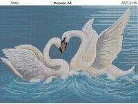 Лебеди 1